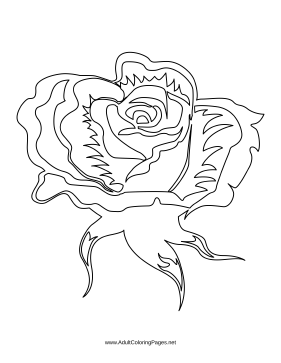 Blossom coloring page