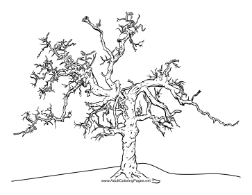 Gnarled coloring page
